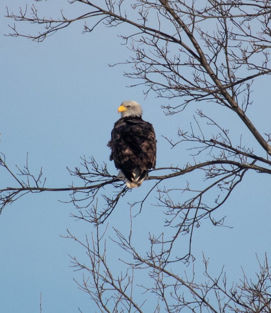 Waiting For Eagles | Photo by Victor Howe | Copyright 2018